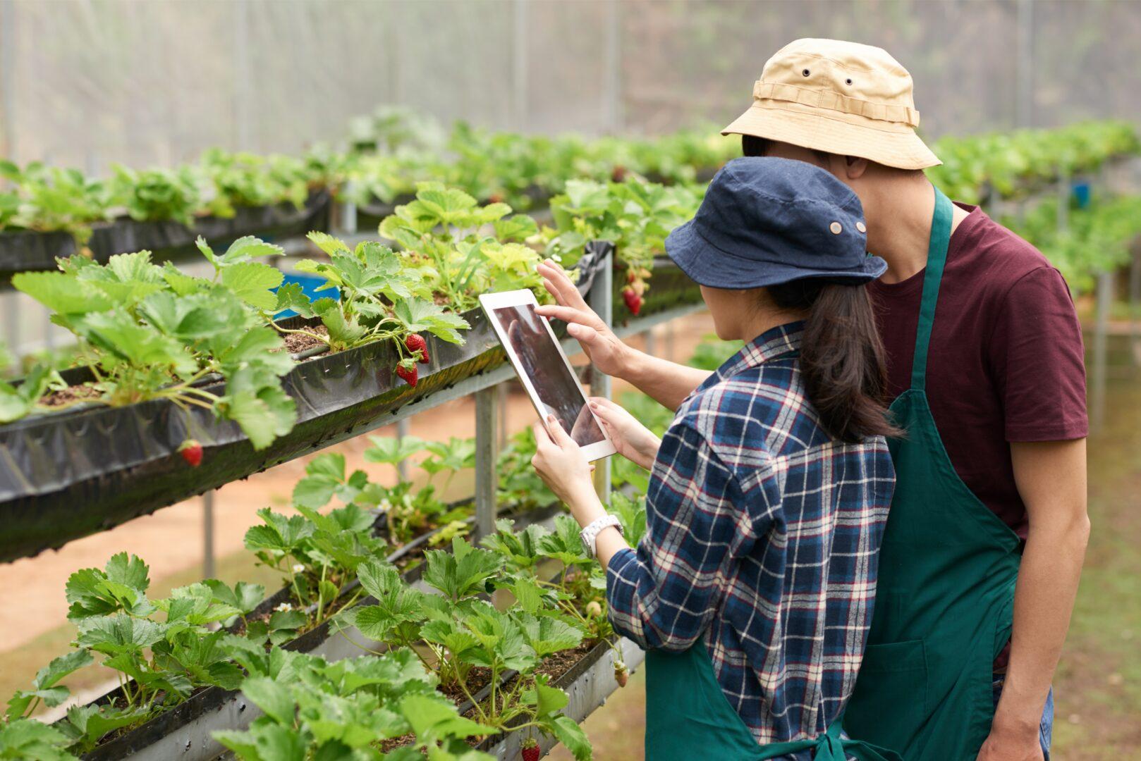 Proyecto agrícola urbano